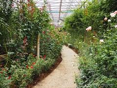 English garden style. (natureflower) Tags: english garden