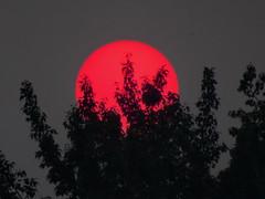 BC wildfire smoke creates a red setting sun (+4) (peggyhr) Tags: peggyhr sunset red sun smoke wildfire silhouettes bluebirdestates alberta canada carolinasfarmfriends thegalaxy super~sixbronze☆stage1☆ infinitexposurel1 thegalaxystars dslrautofocuslevel1 dsc01554abx thegalaxylevel2 thegalaxylevel2halloffame