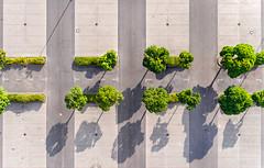 4:4 (Ma..Ja) Tags: brandenburg parkplatz nature vs concrete parking lot drone dji single abstrakt top down view birdview green pflaster geometrisch formen schatten grey grau trees bäume central four eight vier acht linien lines stripes streifen shadows viergewinnt einkaufen