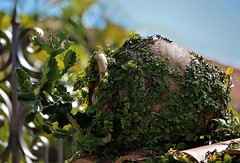 On A Wall (ACEZandEIGHTZ) Tags: nikon d3200 cactus planter wall ceramic vase large clay ficus pumila
