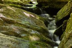 Flowing down (natalie_iwasz) Tags: nature trail adventure hike water flow stream natural moss nikon nikond3400 beginner light green