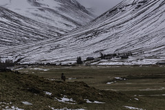 One Horse (jessicalowell20) Tags: adventure black brown buildings clouds europe farm field gold grass green horse iceland landscape mist mountains noperson northernlatitudes rural snaefellspeninsula snow spring summer travel trees valley westiceland white