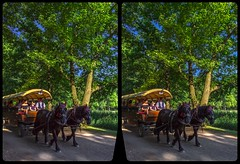 Carriage ride 3-D / CrossView / Stereoscopy / HDRaw (Stereotron) Tags: saxony sachsen moritzburg kutsche pferde carriage paddock europe germany deutschland cross eye view xview crosseye pair free sidebyside sbs kreuzblick bildpaar 3d photo image stereo spatial stereophoto stereophotography stereoscopic stereoscopy stereotron threedimensional stereoview stereophotomaker photography picture raumbild twin canon eos 550d remote control synchron kitlens 1855mm 100v10f tonemapping hdr hdri raw availablelight