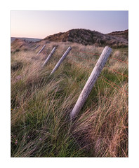 Windswept (Dave Fieldhouse Photography) Tags: cornwalllife cornwall cornish southwestcoastpath coastal coast seaside grass fence windswept posts leaning sky summer earlysummer portrait outdoors thrift seathrift fuji fujifilm fujixt2 wwwdavefieldhousephotographycom nature dusk afterglow evening lowlight rust barbedwire uk wire windblown