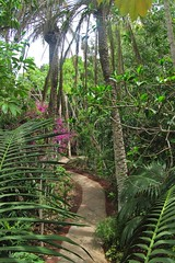path in the jungle :) (green_lover (I wait for your COMMENTS!)) Tags: path junglepark tenerife canaryislands spain trees palms plants green travels vegetation