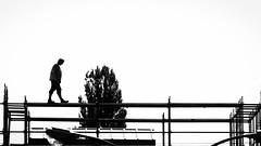 Catwalk (ZinckPhotography) Tags: minimalistic minimal microfourthirds panasonic black blackandwhiteonly bw bnw blackandwhite nature land trees perspective view himmel landstrase personen linien architecture architektur berlin city reflection sunset geometry urban abstract geometrisch einfarbig brücke baum white simple