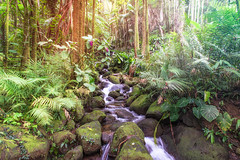 A Stroll in Paradise (Amazing Aperture Photography) Tags: hawaii hilo hilohawaii hawaiitropicalbotanicalgarden nature landscape outdoor wild garden stream water river creek rocks green plants flora trees bushes flowers light colorful vibrant beautiful explore travel adventure tropical tropics rainforest forest botanical
