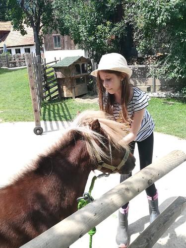 Zuerst einmal werden die Ponies geputzt und gestriegelt