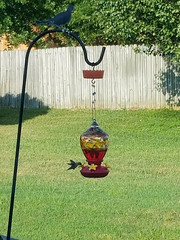 214/365 : Hummingbird