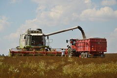 DSC_7550 (anetaležáková) Tags: summer sunset summerharvest sunnydays harvest agriculture agriphoto czechagri caseihpuma case casepuma165 caseoptum casepuma200 claas claaslexion newholland