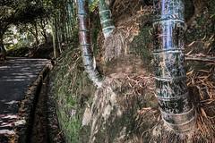 United on the path (Melissa Maples) Tags: batumi batum ბათუმი adjara აჭარა georgia gürcistan sakartvelo საქართველო asia 土耳其 apple iphone iphonex cameraphone მწვანეკეპი mtsvanecape ბოტანიკურიბაღი botanicalgarden bamboo trees forest path road