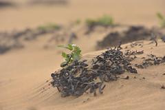 THN_2907 (Thomas Neuhaus) Tags: iceland island westfjorde westfjords raudasandir raudasandur sand wüste strand desert beach