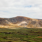 Vinery fields of Canary Islands / Weinfelder von Kanarischen Inseln thumbnail
