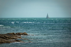 A lone sailboat out there enjoying a little breeze.