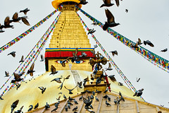 Pigeons flying in front of Boudhanath Stupa in Kathmandu, Nepal (BryonLippincott) Tags: nepal boudhanathstupa asia centralasia religion temple kathmandu tibetan prayerwheel cylindrical sanskrit nepalese nepali asian southernasia inside indoors day daytime travel destination tradition traditional culture heritage religious hindu hinduism spirituality interior old ancient building architecture exterior facade buddhist buddhism stupa monument pigeon pigeons flying flight motionblur slowshutterspeed candidmoment