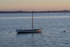 A Hittarp gig at sunset (frankmh) Tags: boat gig sea water sunset evening öresund hittarp skåne sweden denmark landscape