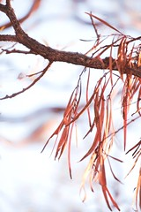 Leaves of Art (Bron.Wolff) Tags: creative abstract art bokeh beautiful orange goldenhour tree branch leaves nature
