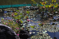 SDIM0105 (LZ775) Tags: sigma 1750mm sd1m 適馬 适马 康樂公園 honglokpark fanling 粉嶺 岭 香港 新界 hongkong newterritories x3 foveon