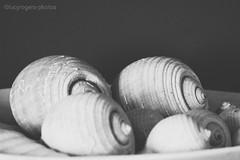 (lucyrogersphotography) Tags: blackandwhite bw seashells shells villa decor decoration greece lucyrogersphotos
