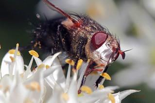 190 friggen bug