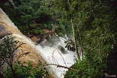 Iguazú - Misiones - Argentina (Martín Melo Garay) Tags: iguazu cascada waterfall nature animal green aves water agua brasil argentina wonder
