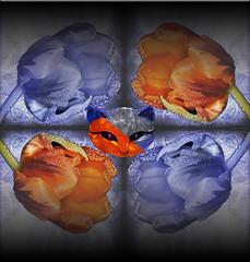 Bicolor (seguicollar) Tags: imagencreativa photomanipulación art arte artecreativo artedigital virginiaseguí tulipanes azul rojo gato caras cabeza espejo mirror