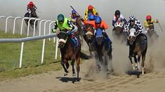 DSC_3478 (emina.knezevic) Tags: jockey racing gallop gallopracing racinghorses horses equestrian equeatrianphotography animalphotography hippodrome hippodromebelgrade hipodrombeograd thoroughbred thoroughbredracing throughbredracingphotos nikon nikonphotographer nikond3200 nikonsport