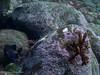 Sepia 1 (Der Felsberg) Tags: madeira sea riff atlantic meer sepia auge eye