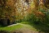 Aremberg (clemensgilles) Tags: bäume trees wälder germany deutschland spring burg eifel