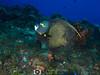French Angelfish (R. Donald Winship Photography) Tags: aquaticlife cozumel dalilasreef divingunderwater frenchangelfish
