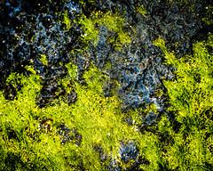 Drift.jpg (Klaus Ressmann) Tags: klaus ressmann omd em1 abstract beach color efuerteventura nature rock spring design flcabsnat green macrophotography seaweed klausressmann omdem1
