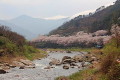 3Road1023_0445-ps (revinhart) Tags: southkorea spring hadong road1023