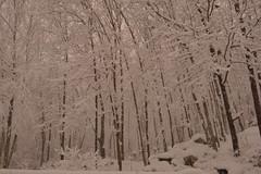 Time to cool off......... (l_dewitt) Tags: snow snowstorm southeasternconnecticut southernnewengland winter earthnaturelife nikon nikonimages nikonphotos d7100 nikond7100photos nikond7100