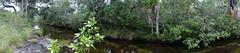 PNN La Macarena, Caño Cristales (proyectos de paisaje y arquitectura) Tags: panoramicas paisaje colombia méxico