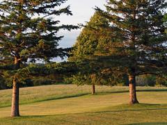 setting sun light trees (Ange 29) Tags: setting sun light trees lawn field olympus omd em1 35100mmzd king township canada