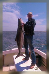Cobia April 11, 2016 (mbnude) Tags: banshee fishing cobia destin florida gulfofmexico