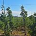 Riverwood Orchard-12