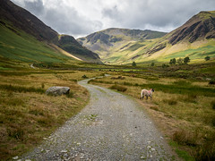 Walking into Newlands, Lake District (Bob Radlinski) Tags: cumbria cumbrianmountains england europe greatbritain lakedistrict newlands uk travel em1c8913orf
