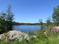a lake in the forest (VERUSHKA4) Tags: canon europe northerneurope russia solovetskyarchipelago island blue arkhangelskyregion nature vue view summer july summertime day flora verdure greenery plant sand flower fleur perspective bloomingsally
