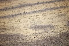 Skipsea, East Yorkshire 2018 (SteveH1972) Tags: skipsea skipseacoast coastal eastyorkshire yorkshire outside outdoor outdoors 2018 canon 700d 70200 canon700d canon70200 nonis northernengland britain uk beach sand