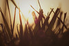 grassy (Sarah Rausch) Tags: grass grassy warmth flare macro sunset blade blades sunny spring nature sunflare