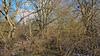 20180402_163001 (wos---art) Tags: bildschichten wald sträucher bäume äste fusweg wildwuchs natur natürlich gewachsen