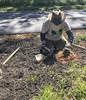 oklawaha pollinator planting 042118-31 (NCAplins) Tags: hendersonville northcarolina unitedstates us
