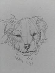 Dog sketches (# annola) Tags: dog dogs drawing sketch pencil practice animal pet portrait cane disegno schizzo matita chien dessin crayon