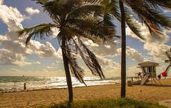 big respect for this job (tomflamy) Tags: lifeguard baywatch ftlauderdale florida sea palmen palmtree beach usa meer strand rescue