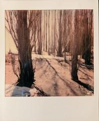 The Shores (jillybeanmi) Tags: roidweek18 filmisnotdead film polaroid instantfilm instant impossible greatlakes lakesuperior