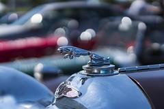 Jaguar Gepard SS 2.0 (MLopht | Dortmund) Tags: auto kfz car autos cars oldtimer classic oldtimershow sonly alpha 6300 sony ilce jaguar gepard jaguargepard kühler kühlerfigur chrom bokeh sonyalpha6300 ilce6300