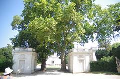 JLF17847 (jlfaurie) Tags: jardin garden bagatelle paris france francia parc parque 22072018 mpmdf jlfr jlfaurie mechas roseraie fleurs roses rosas