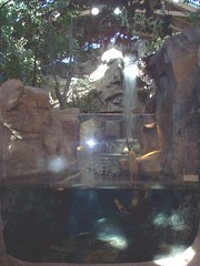 Indoor Waterfall (Adventurer Dustin Holmes) Tags: indoor basspro wondersofwildlife museum springfieldmo springfield greenecounty missouri ozarks midwest exhibit interior inside waterfall water aquarium glass wall freshwater trees rocks walls