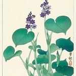 Blooming hosta (1920 - 1930) by Ohara Koson (1877-1945). Original from the Rijks Museum. Digitally enhanced by rawpixel. thumbnail